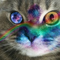 petsofpicsart catlove colorful freetoedit