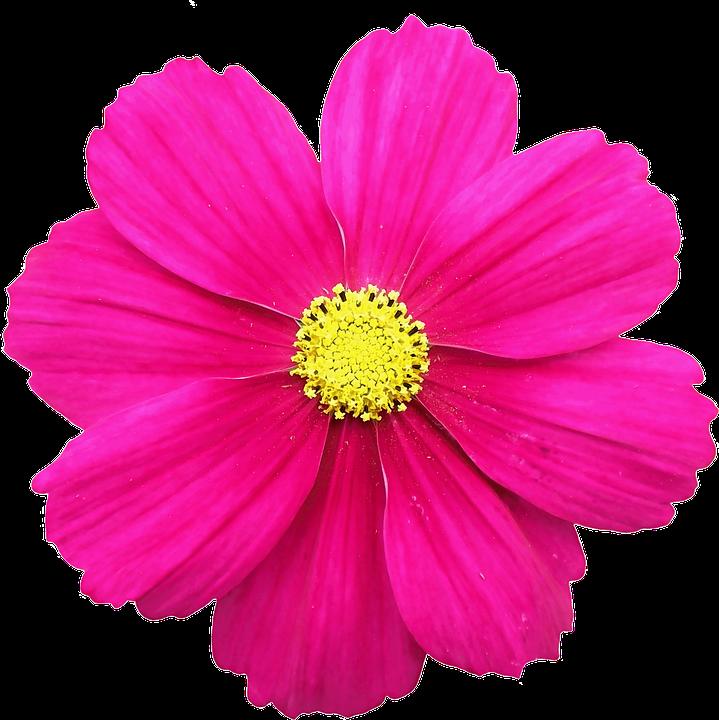 #ftestickers #flowerstickers #FreeToEdit