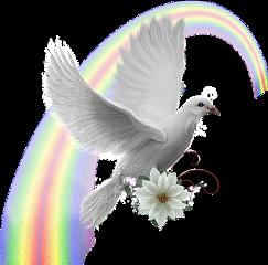 rainbow dove freetoedit