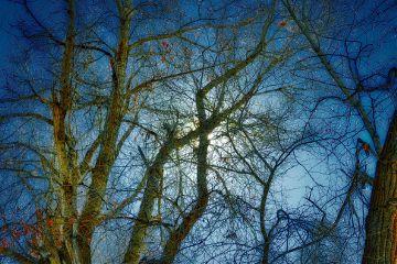 angeleyesimages nikon nikonusa trees tree