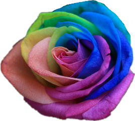 rainbow rose flowerstickers freetoedit
