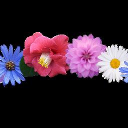 ftestickers flowercrown flower