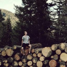 freetoedit forest woodland switzerland