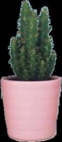 plants cactus cactuslover freetoedit