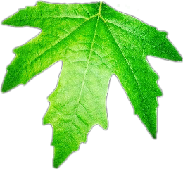leaves leaf green bright nature