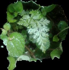 #nature fromcostarica byliriosbellos withpicsart purelife
