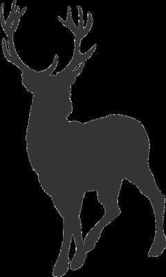 hirsch deer freetoedit