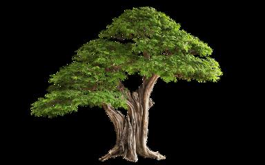 trees nature freetoedit