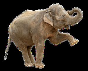 animals elephant freetoedit