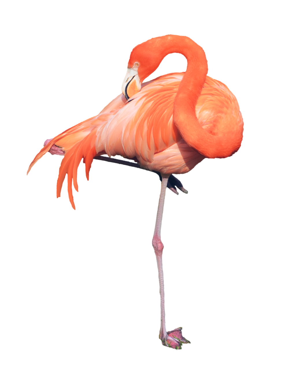 #ftestickers #flamingo #FreeToEdit
