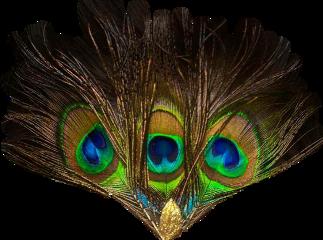 feathers headgear peacockfeathers freetoedit