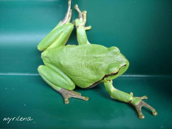 #dpcgarden #dpcfrogs