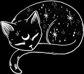 blackcat cat kitty stars luna
