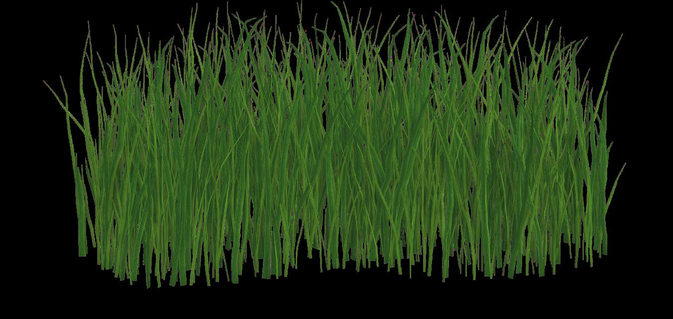 #lawn#FreeToEdit
