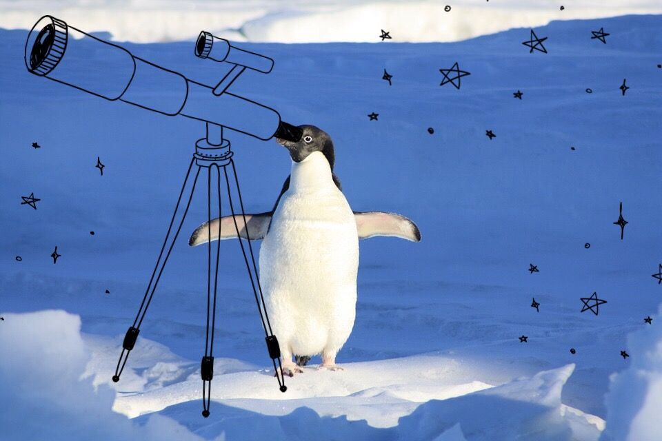 #FreeToEdit #PenguinDay