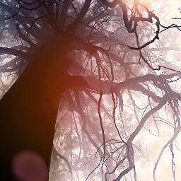 treeoflife treeoflifebrelfie treesoflife treelove treescape