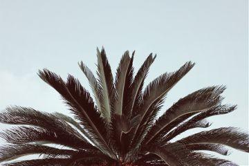 nature trees palmtree skybackground naturephotography