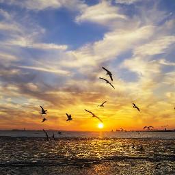 sun sky ocean sea bird