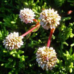 freetoedit plants flower littleflowers