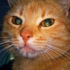 freetoedit cat catlover cateyes catsofpicsart