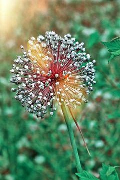 freetoedit flower nature photography
