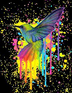 hummingbird watercolor dripping freetoedit
