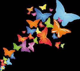 butterfly butterflies colorful freetoedit
