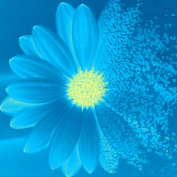 dispersion picsart flower