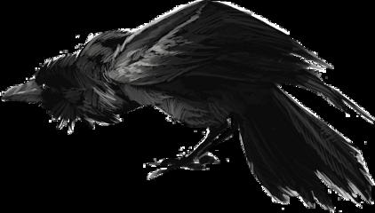 crow raven dark scary freetoedit