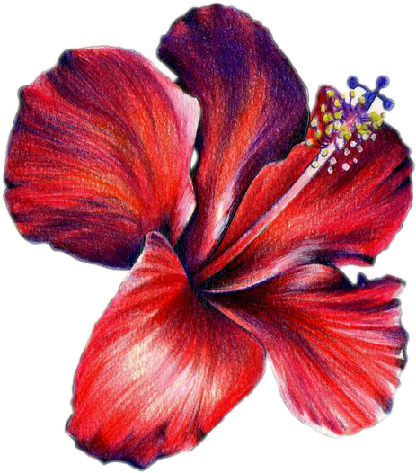#flower #free #nature