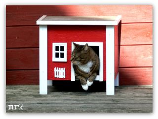 freetoedit cat petsandanimals garden red