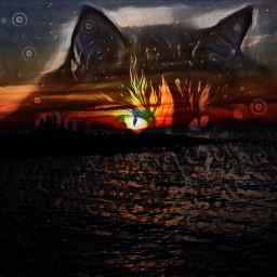 cat sunset eye