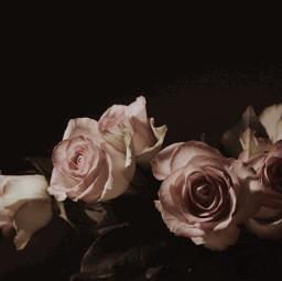 dpcfloralbouquet roses pink flower photography