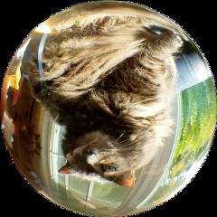 freetoedit cat ball glassball