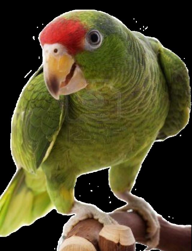 #animals #bird #FreeToEdit