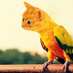 freetoedit parrotcat parrot cat animalhybrid wapanimalhybrid