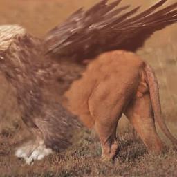 wapanimalhybrid animal hybrid animalhybrid eagle