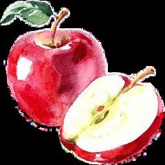 apple red fruit sticker freetoedit