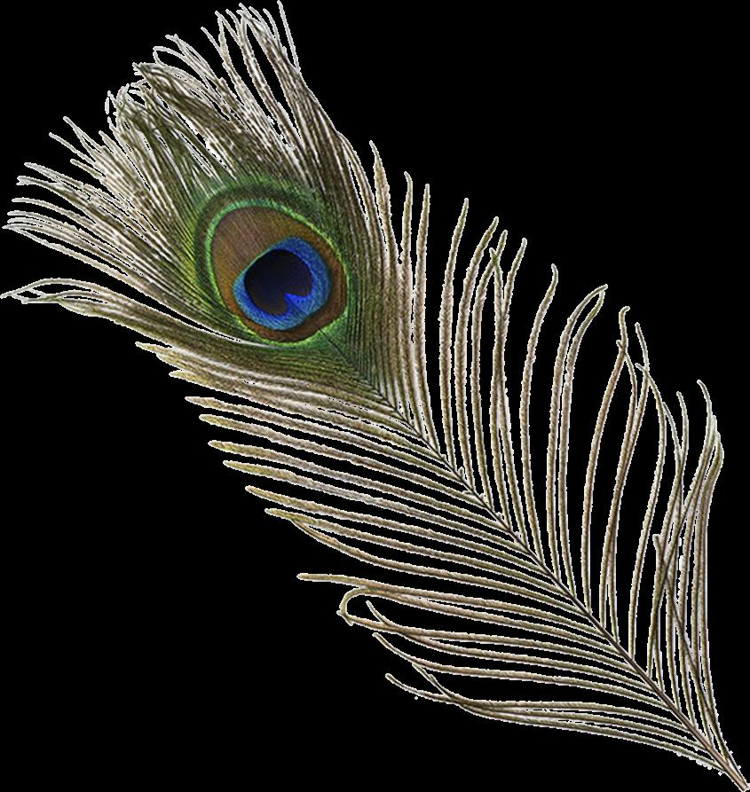 Origftesticker peacock feather peacockfeather green blu - Beautiful peacock feather ...
