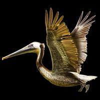 animalstickers crane freetoedit