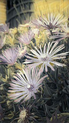 freetoedit madewithpicsart magiceffects flower