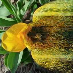 freetoedit dispersion tulips