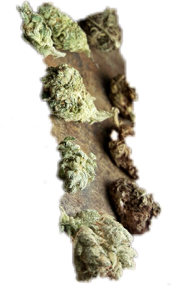 weed 420stickers freetoedit