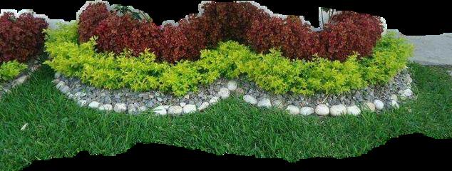 #fromcostarica byliriosbellos withpicsart purelife freetoedit
