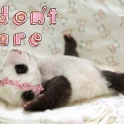 freetoedit idontcare panda cute