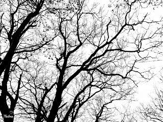 freetoedit blackandwhite stark highcontrast treebranches