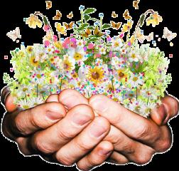 hands holding flowers garden freetoedit