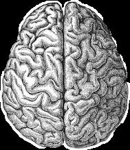 brain freetoedit