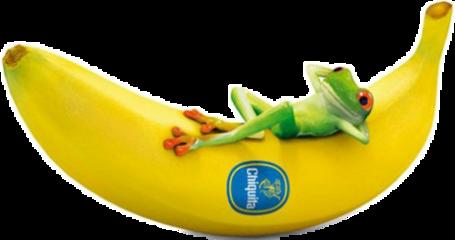 banana frog#funny freetoedit frog funny