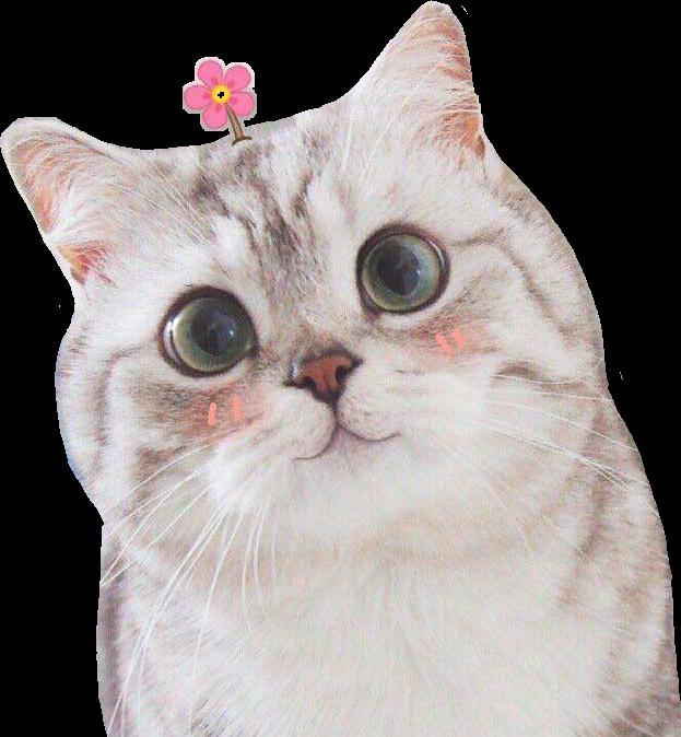 #M_Cat